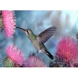 Topný obraz - Kolibřík