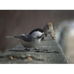 Topný obraz - Americký ptáček