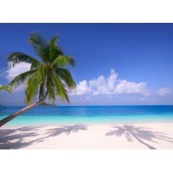 Topný obraz - Palmové stíny