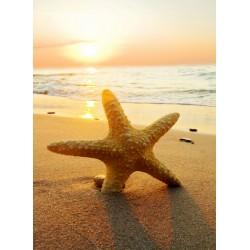 Topný obraz - Mořská hvězdice v písku