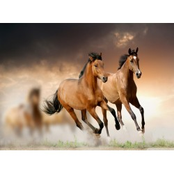 Topný obraz - Koně