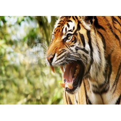 Topný obraz - Tygří řev