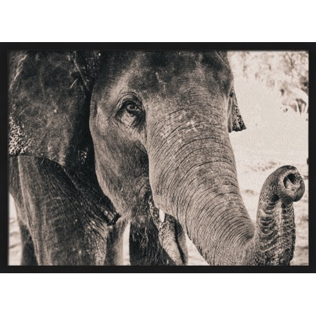Topný obraz - Černobílý slon