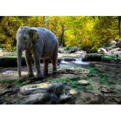 Topný obraz - Slona