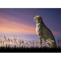 Topný obraz - Gepard