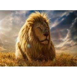 Topný obraz - Lev