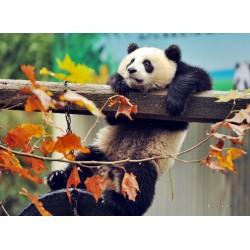 Topný obraz - Panda