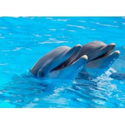 Topný obraz - Delfíni