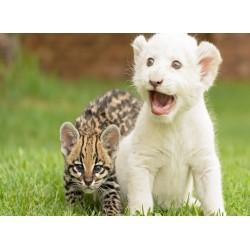 Topný obraz - Mláďata kočkovitých šelem