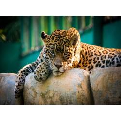 Topný obraz - Jaguár