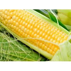 Topný obraz - Kukuřice
