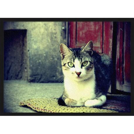Topný obraz - Kočičí pohled