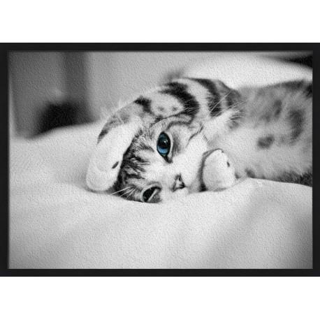 Topný obraz - Malé kotě