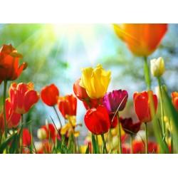 Topný obraz - Barevné tulipány