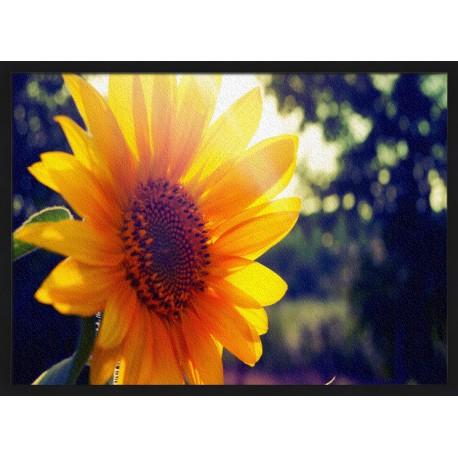 Topný obraz - Slunečnice v letních paprscích