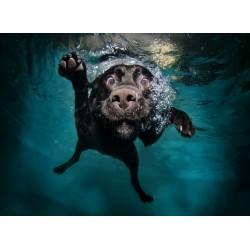 Topný obraz - Pes pod vodou