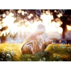 Topný obraz - Šťastný pes