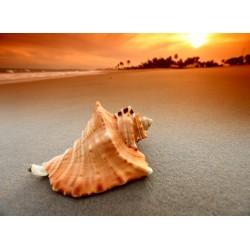 Topný obraz - Mušle na pláži