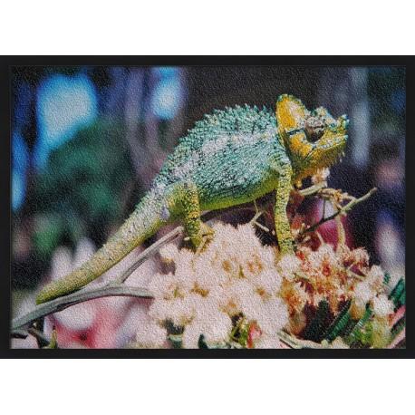 Topný obraz - Chameleon