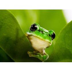 Topný obraz - Žába