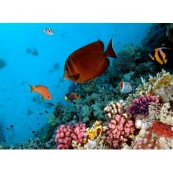 Topný obraz - Oceán
