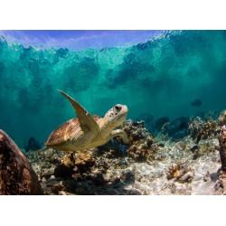 Topný obraz - Mořská želva