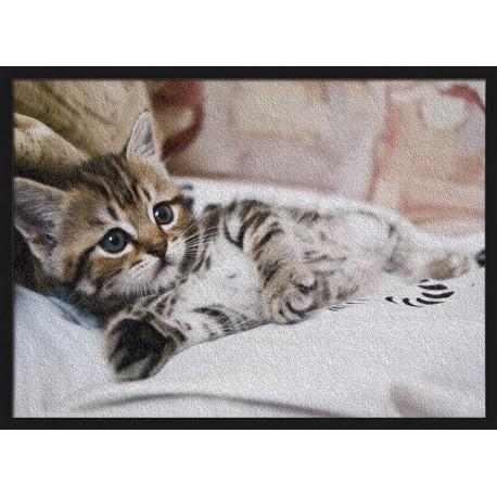 Topný obraz - Koťátko