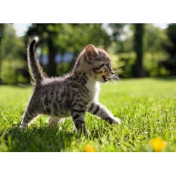 Topný obraz - Mourovaté kotě