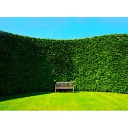 Topný obraz - Živý plot