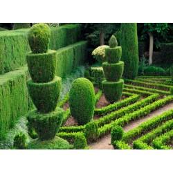Topný obraz - Královská zahrada