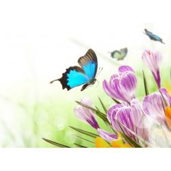Topný obraz - Motýl