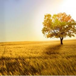 Topný obraz - Strom v savaně