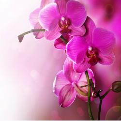 Topný obraz - Fialová květina