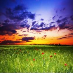 Topný obraz - Luční kvítí