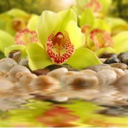 Topný obraz - Žlutozelená orchidej