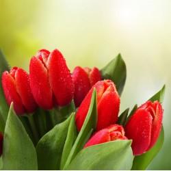 Topný obraz - Červené tulipány