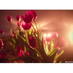 Topný obraz - Květy
