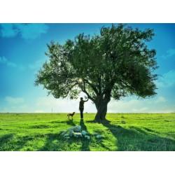 Topný obraz - Strom poznání