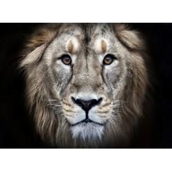 Topný obraz - Král džungle