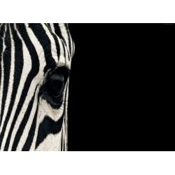Topný obraz - Zebra ve tmě