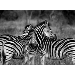 Topný obraz - Zebry