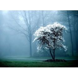 Topný obraz - Bílý strom