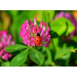 Topný obraz - Beruška na květu