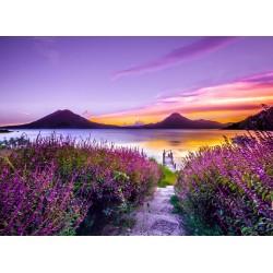 Topný obraz - Levandulový ráj