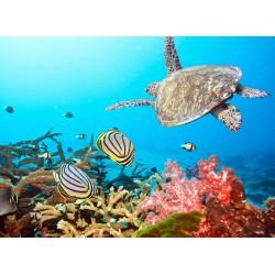 Topný obraz - Mořský svět