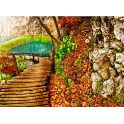 Topný obraz - Cesta lesem