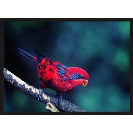 Topný obraz - Červený ptáček