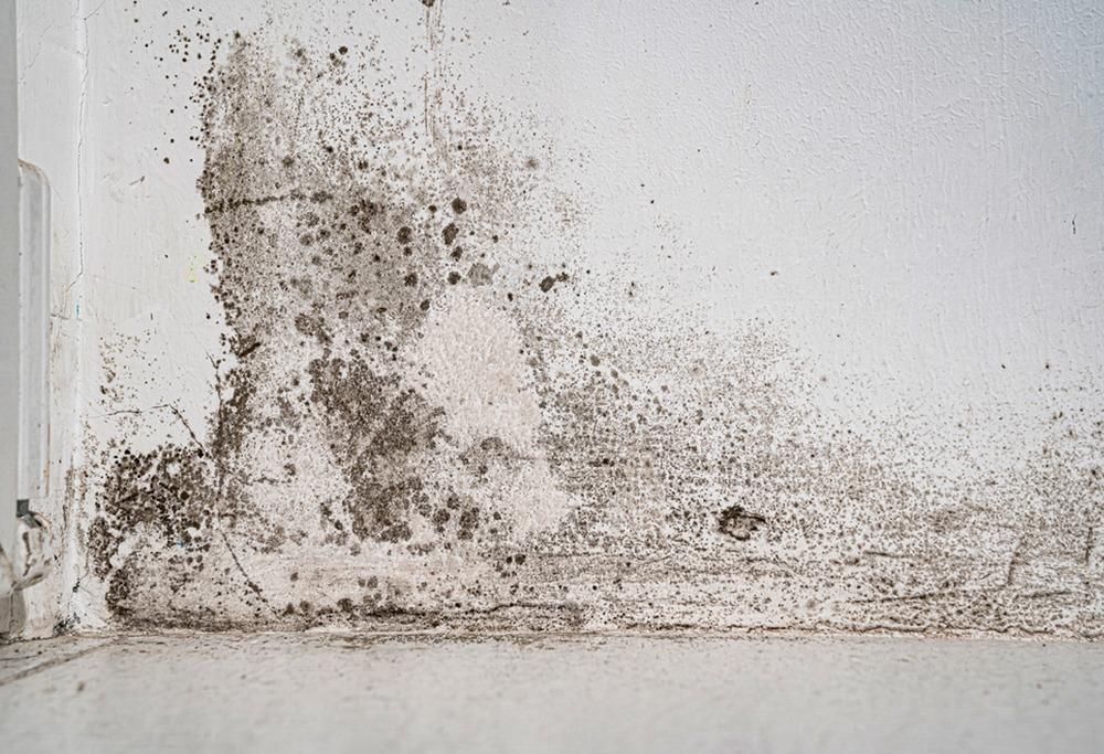Jak zabránit plísním aby se znovu tvořili?